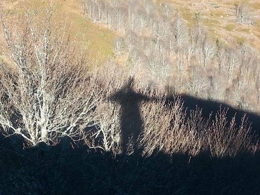 ombre sur la hêtraie