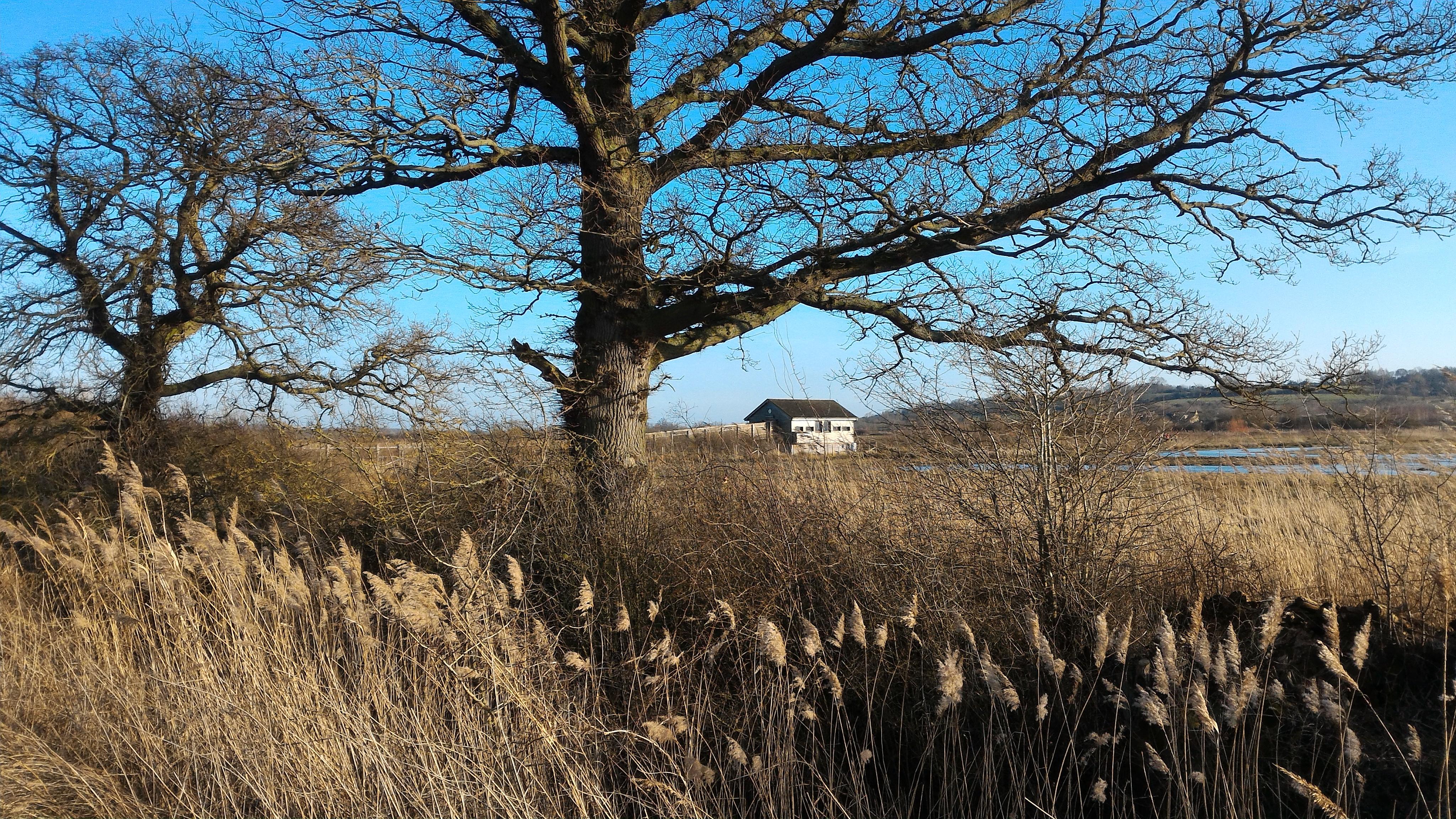cabane d'observation des oiseaux photographiée au retour